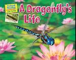 A Dragonfly's Life