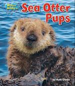 Sea Otter Pups