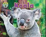 Koala (Treed Animal Life in the Trees)