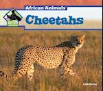 Cheetahs af Julie Murray
