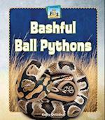 Bashful Ball Pythons (Unusual Pets)