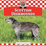 Scottish Deerhounds (Dogs)