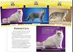 Cats Set (Cats Set 7)