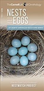 Nests and Eggs of North American Backyard Birds (Cornell All about Birds)