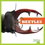 Beetles (Insect World)