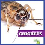 Crickets (Insect World)