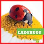 Ladybugs (Insect World)