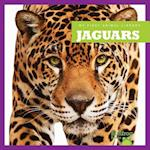 Jaguars (My First Animal Library)