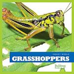 Grasshoppers (Insect World)
