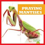 Praying Mantises (Insect World)