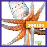 Squids (Life Under the Sea)