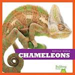 Chameleons (Reptile World)