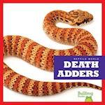 Death Adders (Reptile World)