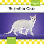 Burmilla Cats (Cats)