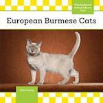 European Burmese Cats (Cats)