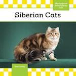Siberian Cats (Cats)