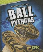 Ball Pythons (AMAZING SNAKES)