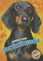 Dachshunds (Blastoff Readers Level 2)