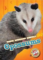 Opossums (Blastoff Readers Level 3)