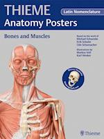 Anatomy Posters Bones and Muscles: Latin Nomenclature