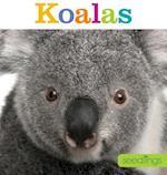 Koalas (Seedlings)