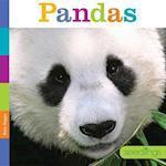 Pandas (Seedlings)
