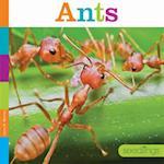 Ants af Laura K. Murray