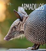 Armadillos (Living Wild Paperback)