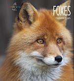 Foxes (Living Wild Paperback)