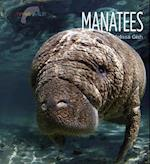 Manatees (Living Wild Paperback)