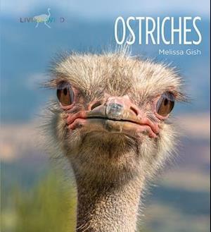 Bog, paperback Ostriches af Melissa Gish