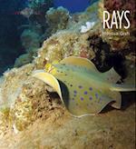 Rays (Living Wild Paperback)