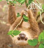 Sloths (Living Wild Paperback)