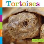 Tortoises (Seedlings)