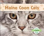 Maine Coon Cats (Cats)