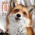 Juniper Fox 2018