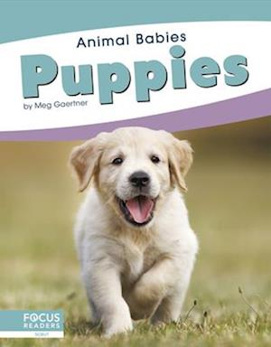 Animal Babies: Puppies