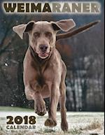 Weimaraner 2018 Calendar