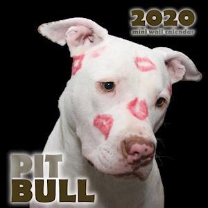Pit Bull 2020 Mini Wall Calendar