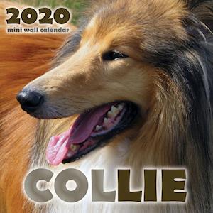 Collie 2020 Mini Wall Calendar