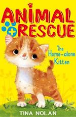 The Home-Alone Kitten (Animal Rescue Center)