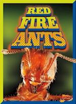 Red Fire Ants (Invasive Species Takeover)