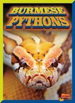 Burmese Pythons (Invasive Species Takeover)