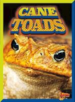 Cane Toads (Invasive Species Takeover)