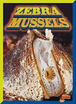 Zebra Mussels (Invasive Species Takeover)