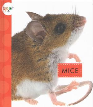 Bog, hardback El Raton (Mice) af Marysa Storm