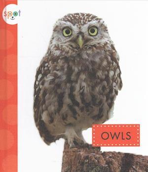 Bog, hardback Owls af Wendy Strobel Dieker