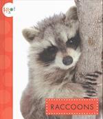 El Mapache (Raccoons) af Marysa Storm
