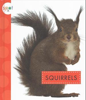 Bog, hardback Squirrels af Wendy Strobel Dieker