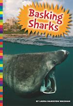 Basking Sharks (SHARKS)